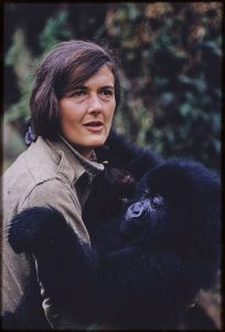 Dian Fossey (photo credit:  University of Florida Bob Campbell collection)